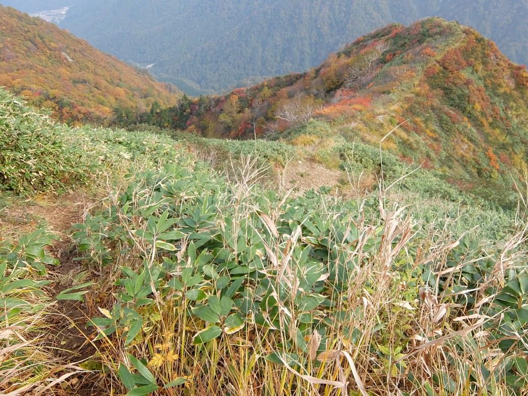 2015-10_tanigawa-dake_0091