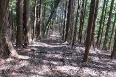 2016-05_tanzawa_mitsuba-dake_jougao-ouge_0213